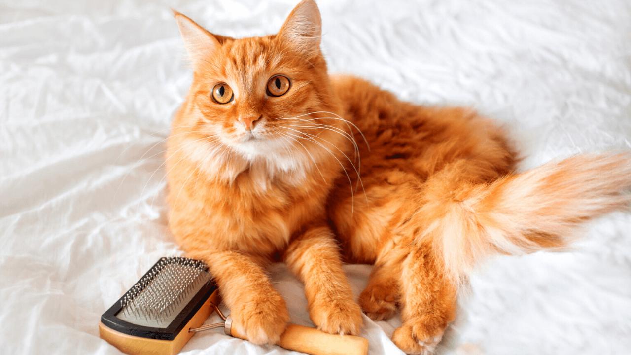 Best Cat Self Groomer