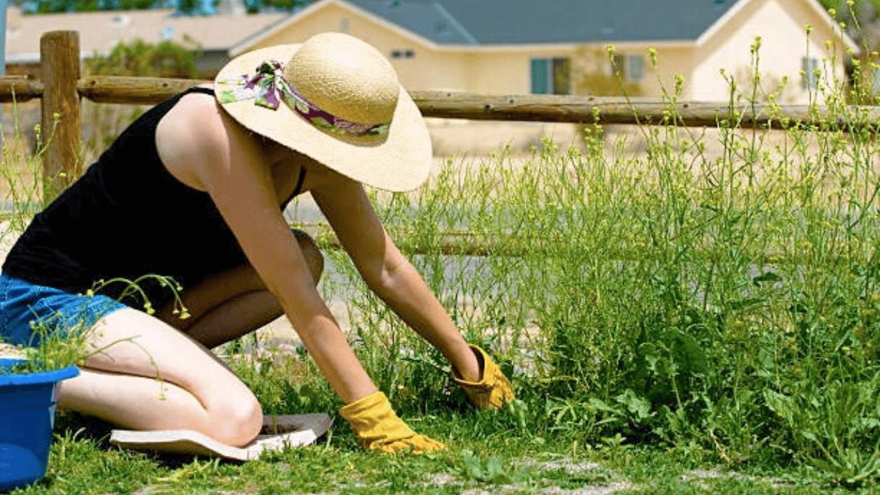 Best gardening knee pad Online