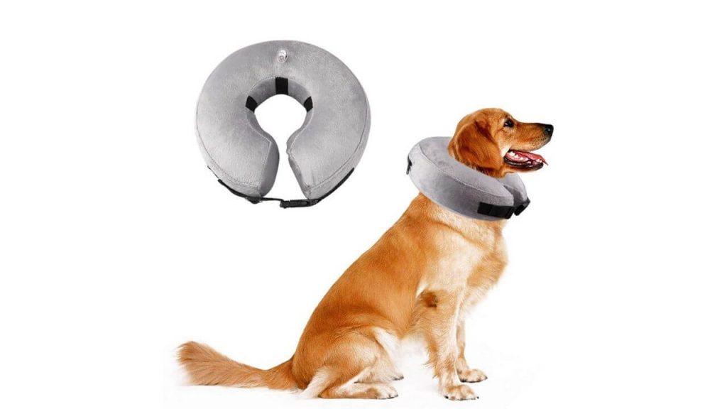 protective inflatable dog collar