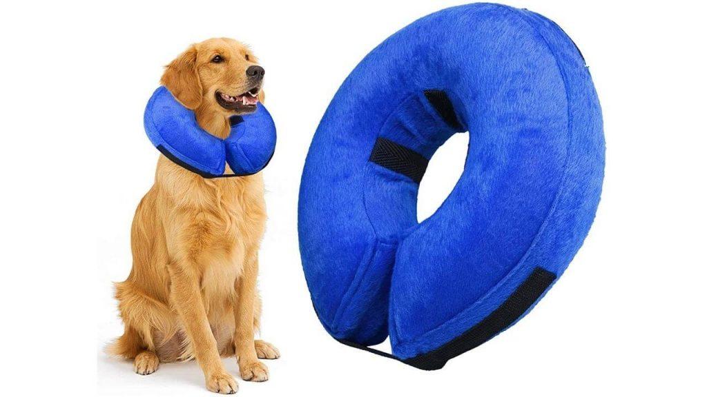 inflatable dog rehab collar