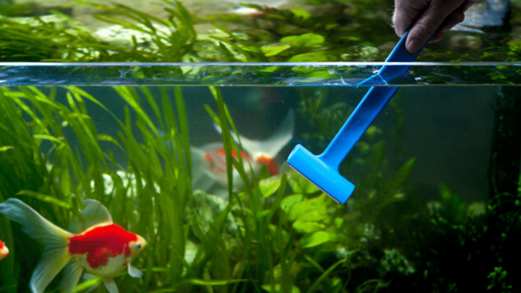 This image has an empty alt attribute; its file name is best-aquarium-glass-cleaner-1024x576.png
