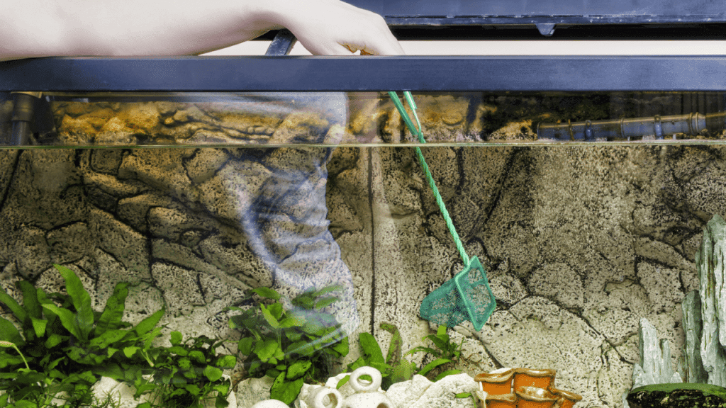 This image has an empty alt attribute; its file name is best-magnetic-aquarium-glass-cleaner-1024x576.png