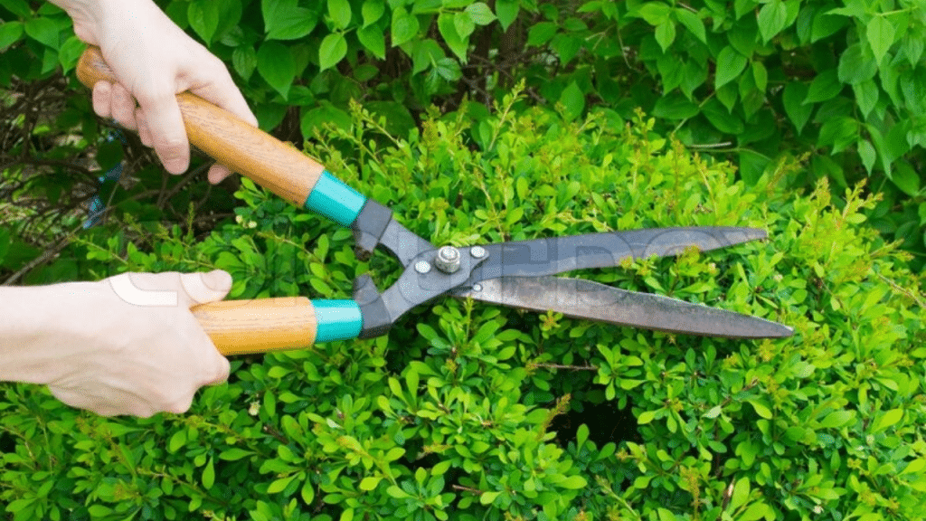 This image has an empty alt attribute; its file name is Electric-Scissors-for-garden-1024x576.png