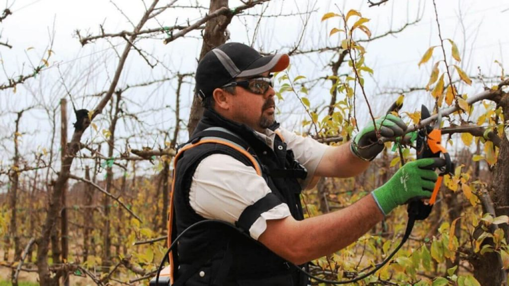 best cordless pruning shear