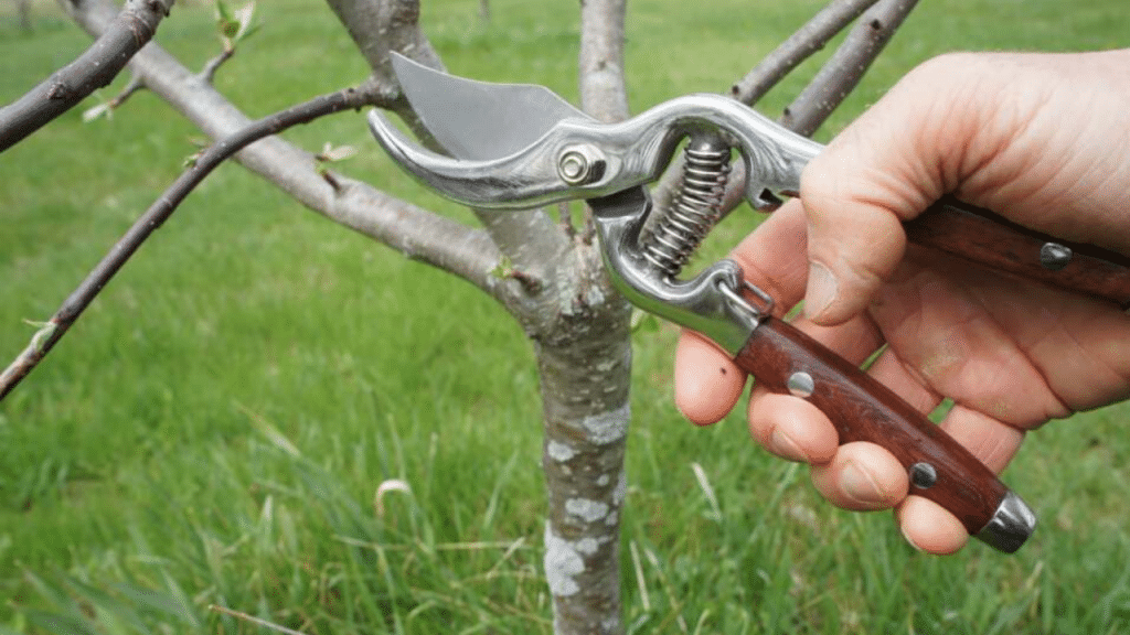 This image has an empty alt attribute; its file name is best-electric-pruning-shears-for-gardening-1024x576.png