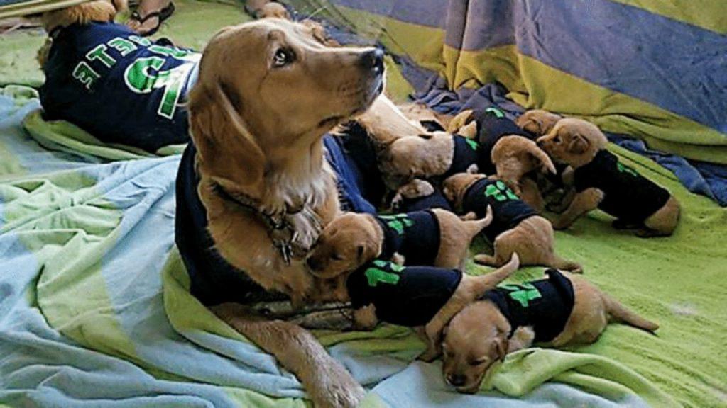 best friend dog sweaters