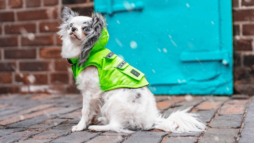 This image has an empty alt attribute; its file name is large-breed-dog-jacket-1024x576.png