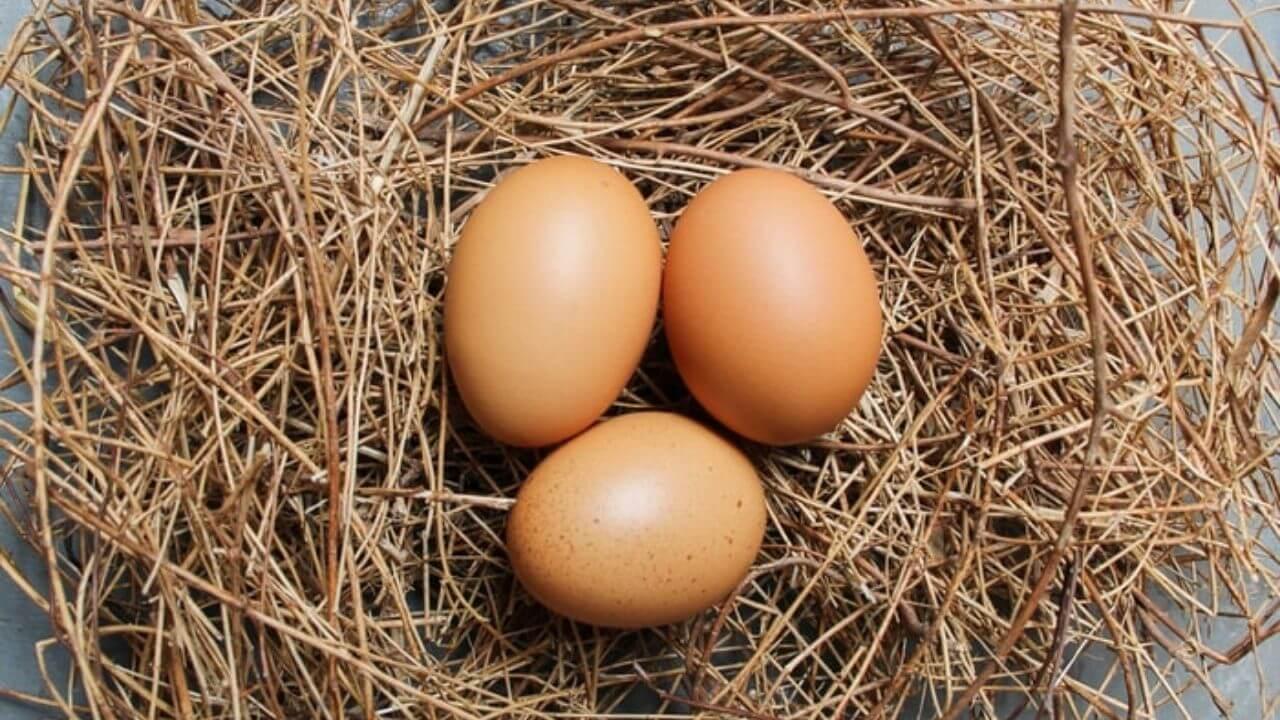 Best egg incubators