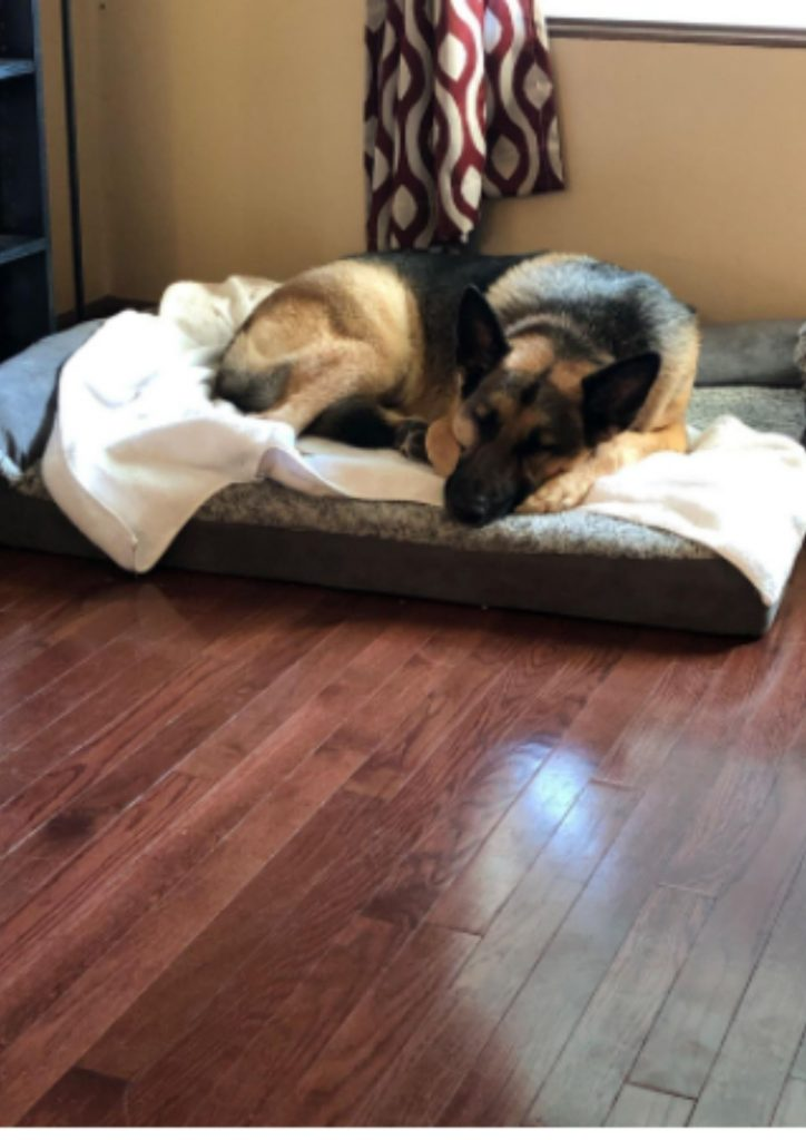 Best Pet Beds | Best Dog Beds According To Experts. 1