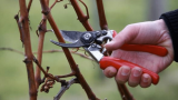 To Design Your Garden With The Best Cordless Electric Garden Scissors: Some Gardening Tips In 2020