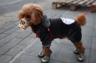 To Protect Your Dog From Cold With The Best Dog Winter Clothes Online: 2021 Best Products For Your Pet