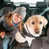 Top 10 Best Dog Car Seat Covers Online: Review On Best Products